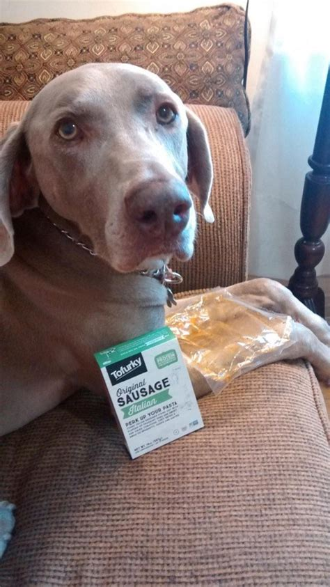 can dogs eat sausage documents s tragic response to vegan sausage aol lifestyle