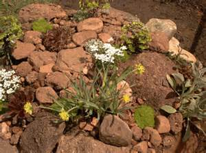 Desert Rock Garden Ideas Small Desert Garden Designs Home Design And Interior Decorating Ideas