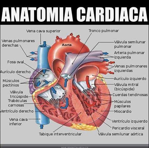 anatomia interna corpo umano anatomia card 237 aca anatomia