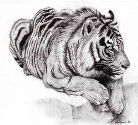 Kaos Animal Sketch 22 22 best images about pencil drawings of animals on jungle animals pencil portrait