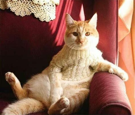 knitting with cat hair 228 best images about knitting cats on cat