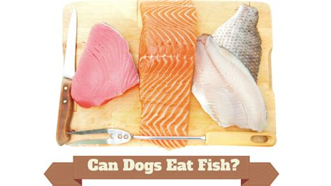 can dogs fish can dogs eat fish and other seafood smart owners