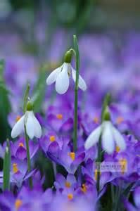 Winter Flowers For The Garden Best 25 Flowers Ideas On Flower Arrangements Tulips Garden And