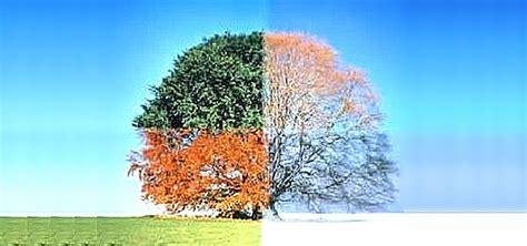 imagenes de invierno otoño verano primavera oto 241 o y primavera de un invierno