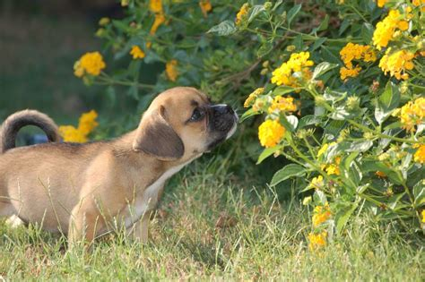 how to keep dogs lawn repellents how to keep dogs away from yards