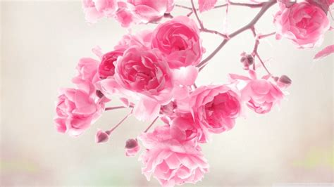 You Want Pink Well Heres Pink by Vintage Pink Roses Wallpaper Wallmaya
