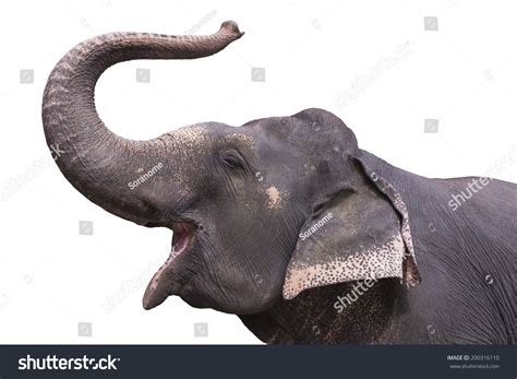 Asian Elephant Trunk Stock Photo 200316110 - Shutterstock