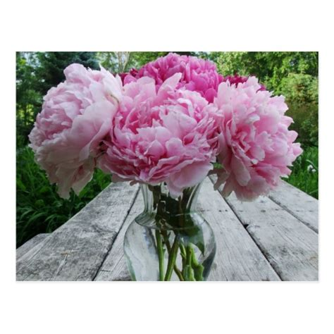 peony flower arrangement pink peonies peony flowers arrangement in vase postcard