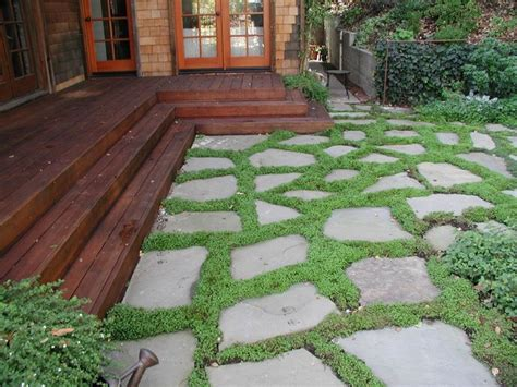 dry laid bluestone patio with groundcover traditional patio san francisco by o connell
