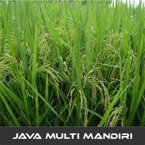 Pupuk Untuk Pertumbuhan Bunga pemupukan yang baik untuk tanaman padi digital meter