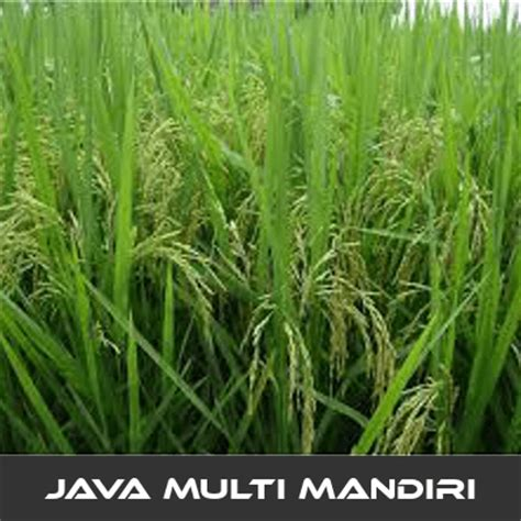 Pupuk Urea Untuk Bunga pemupukan yang baik untuk tanaman padi digital meter