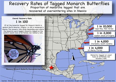 monarch watch migration tagging tagging monarch butterfly migration update journey south news
