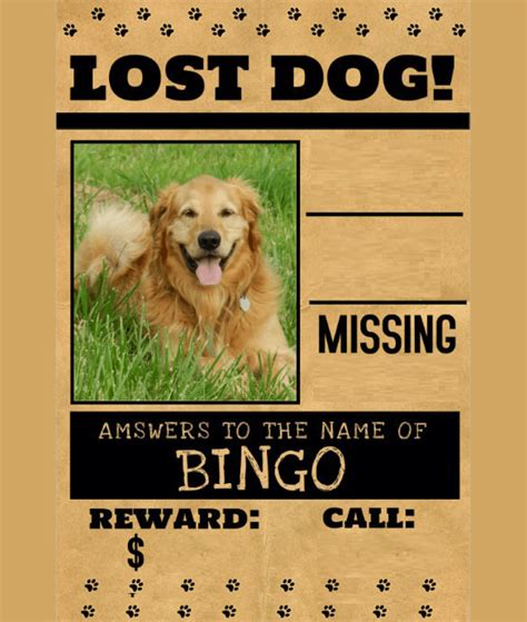 lost cat dog flyer poster templates  microsoft