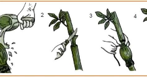 cara membuat yel yel gerak jalan vegetatif tanaman biologi sd inti sari biologi