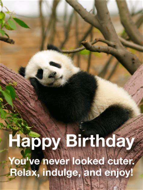 adorable panda happy birthday card birthday greeting cards  davia