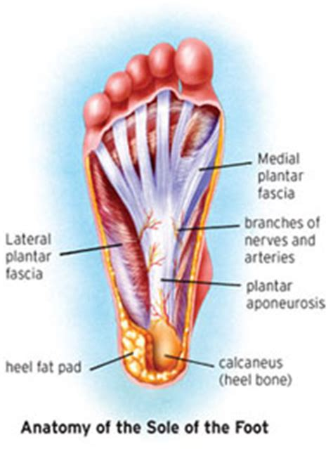 plantar fasciitis diagram running past plantar fasciitis motionworks physical therapy