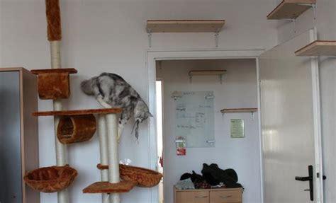 katzengerechte wohnung kleine wohnung katzengerecht gestalten katzen forum
