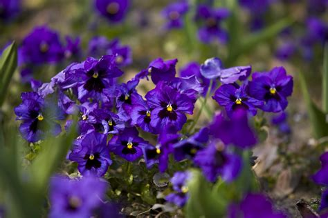 Garten Flora by Flora Und Botanischer Garten K 246 Ln Botanic Garden In
