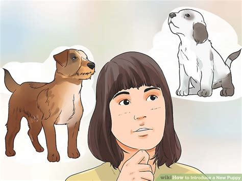 introducing a new puppy to another puppy 5 ways to introduce a new puppy wikihow