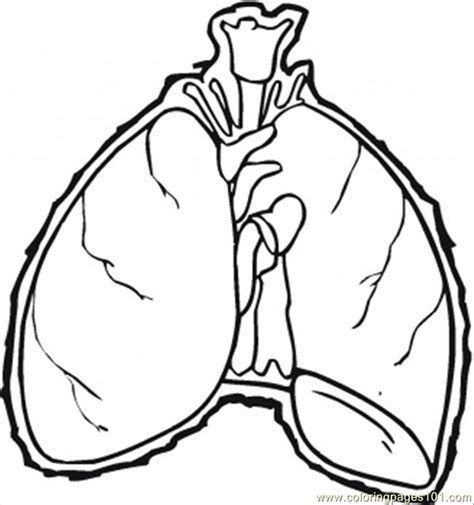 coloring pages of heart and lungs heart and lung colouring pages