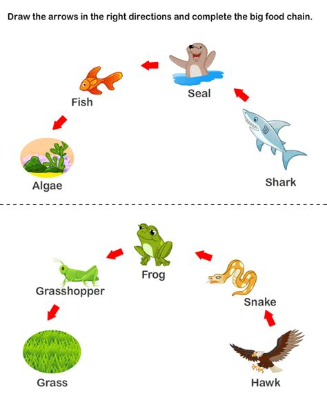 food webs on pinterest food chains science and food food web biodiversity pinterest food webs food