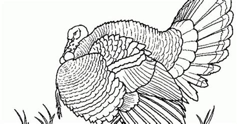 thanksgiving coloring pages for grown ups free realistic coloring page of turkey bird for adults