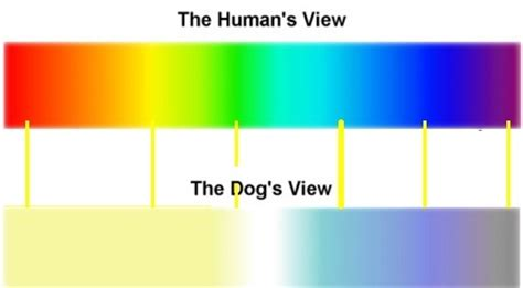 do dogs see color or black and white how do we that dogs see in black and white quora