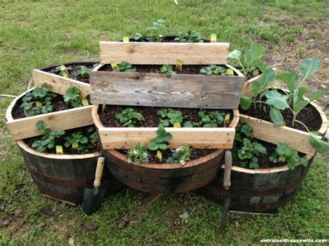 Strawberry Barrel Planter by 220 Ber 1 000 Ideen Zu Strawberry Planters Auf
