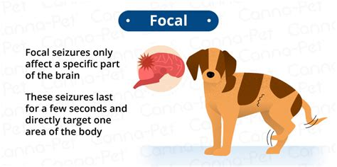 focal seizures in dogs can seizures in dogs cause brain damage canna pet