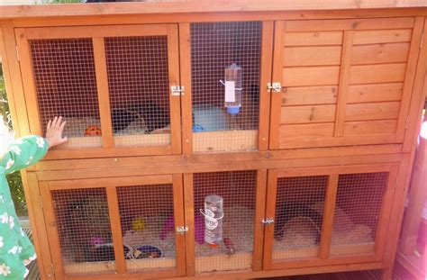 Hutches For Guinea Pigs Guinea Pigs Amp Set Up Large Double Hutch Hope Valley