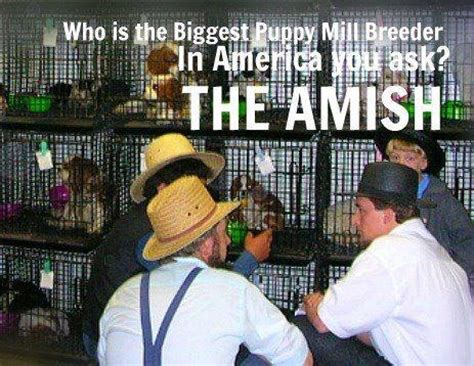 lancaster puppy farms 17 best images about images on buy a the grass and amish