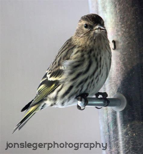 northern illinois birder 1st pics of winter birds of 2012
