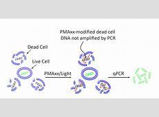Viability PCR | Biotium Nitric Acid Msds