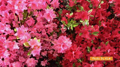 Korean Floral Doormatekarpet Square 1 flowers and their vibrant colors korean language