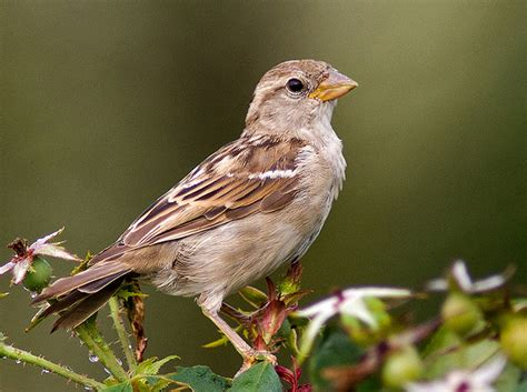25 sparrow images to bring you joy