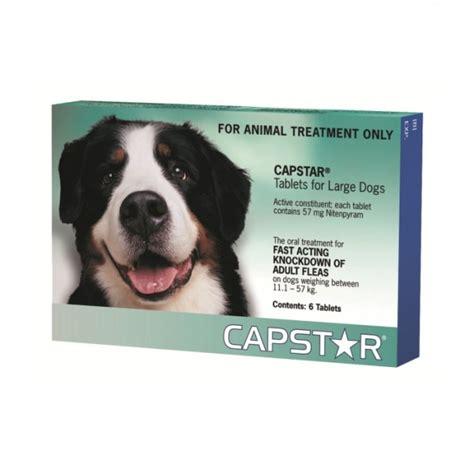 puppy flea medicine capstar large flea treatment petbarn