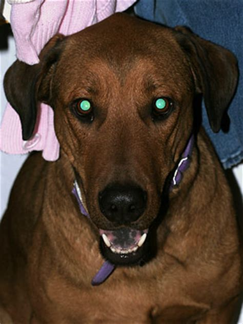 blue film on dogs eyes what does a dog see at night
