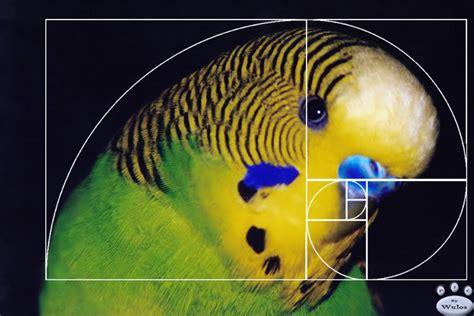 visitor pattern real life exle fibonacci numbers in nature spirals explore fibonacci