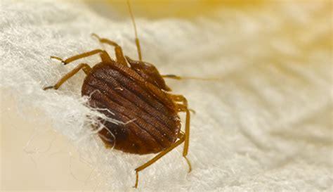 bed bug pest control service pestco professional pest control inc beaumont tx 409 866 8870