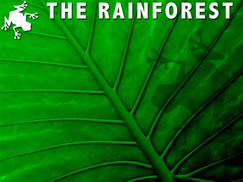 forest template the rainforest powerpoint template 1 adobe education