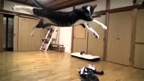 cat vs fight vs cat fight