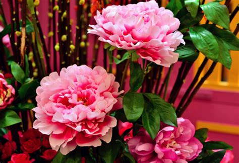 new year flowers auspicious blooms new year flowers prosperity blooms 28 images 18 lucky