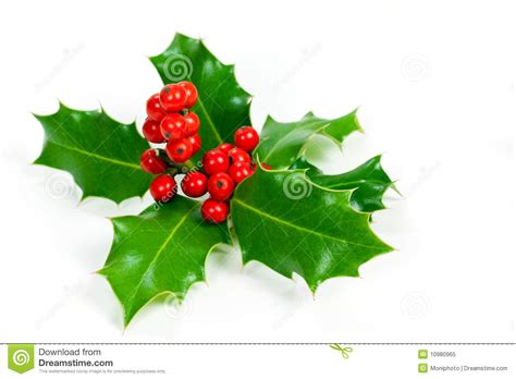 christmas leaf decoration with leaves and berries stock image image of plant 10980965