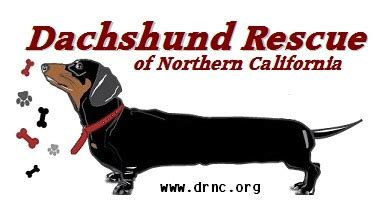 dachshund puppies northern california 17 best images about rescue more on recipes for treats underground