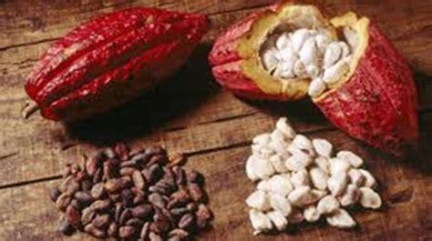 alimenti che contengono nichel lista la dieta enzimatica informazionale allergia al nichel