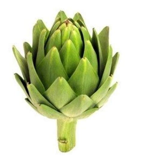can dogs eat artichokes can i give my an artichoke can pet dogs eat artichokes