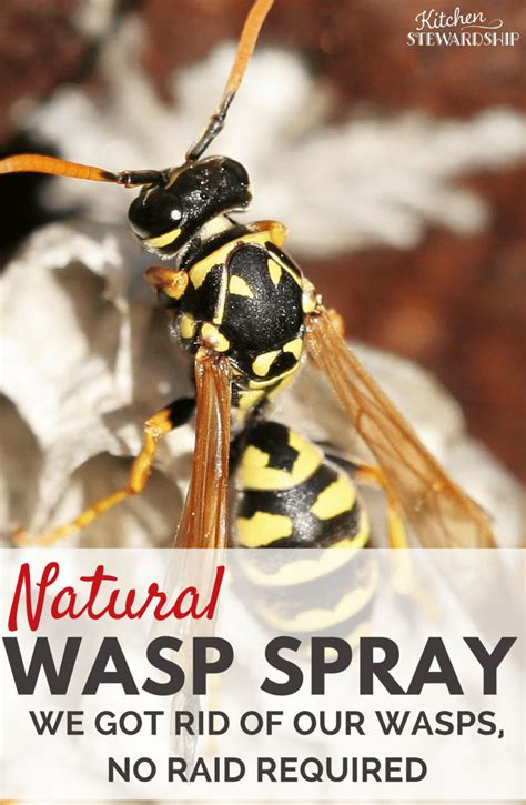 how to get rid of bees in my backyard natural wasp killer get rid of wasp nests without chemicals