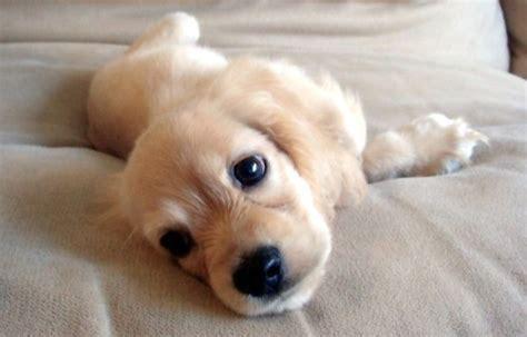 animali piccoli da tenere in casa sei pronta per avere un cucciolo rispondi a queste 9