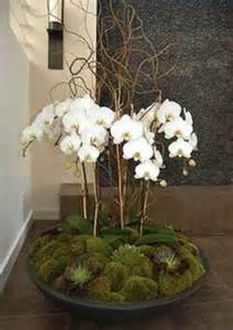 10 best ideas about orchid arrangements on