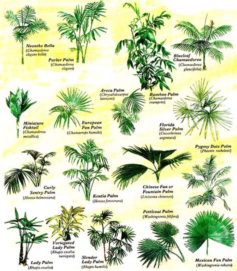 botanical trees tree types 1 landscaping pinterest grow tropical palms at home organic gardening palm